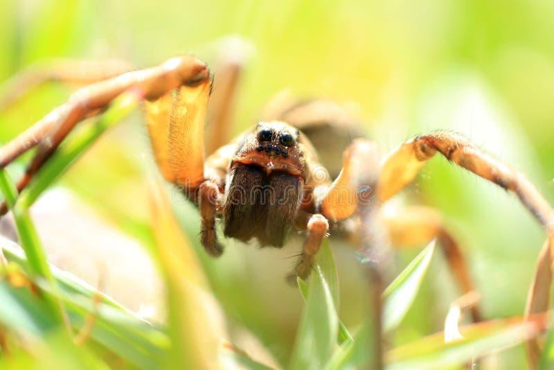 Spinnennahaufnahme lizenzfreies stockfoto