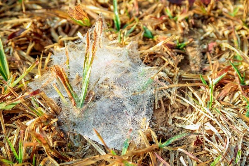 Spinnennetz auf dem Gras bedeckt mit Tau lizenzfreies stockfoto