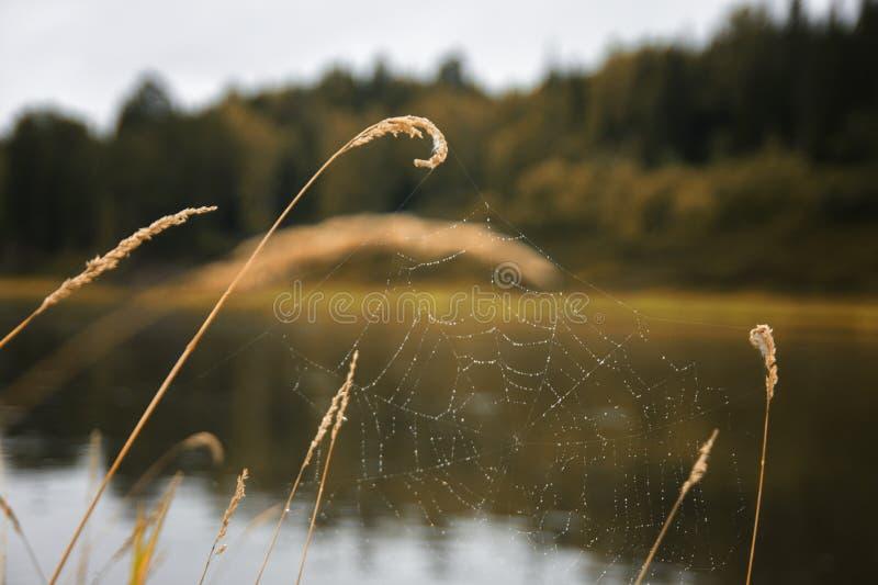 Spinnennetz auf einem Stiel des Grases auf Flusshintergrund lizenzfreies stockfoto