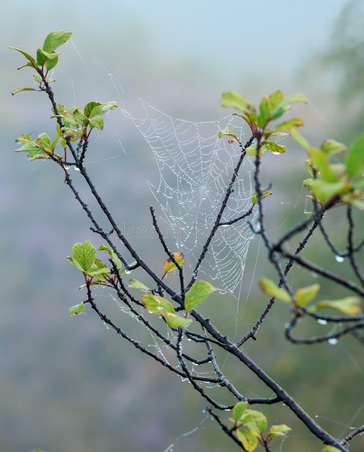 Spinnennetz auf Niederlassungen lizenzfreie stockbilder