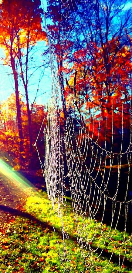 Spinnennetz am frühen Morgen lizenzfreie stockfotos