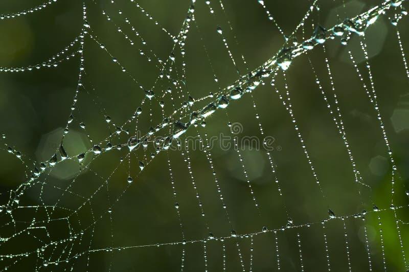 Spinnennetz mit glitzernden Dewdrops stockbild
