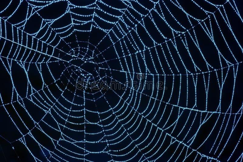 Spinnennetz mit glitzernden Dewdrops lizenzfreies stockbild