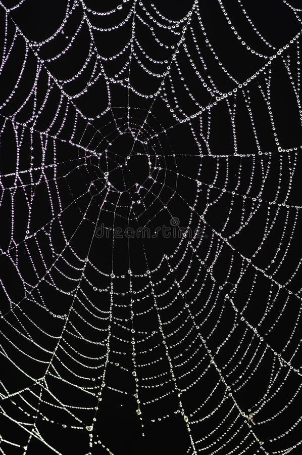 Spinnennetz mit glitzernden Dewdrops lizenzfreie stockfotografie