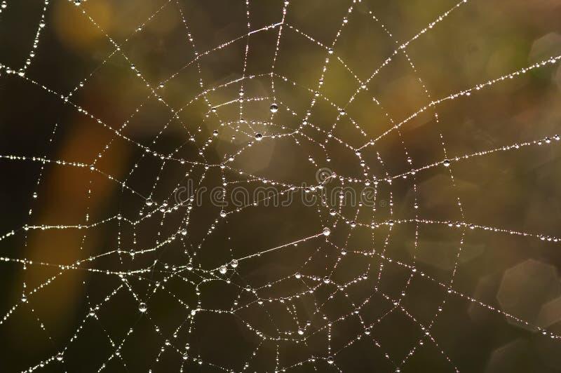 Spinnennetz mit glitzernden Dewdrops stockbilder