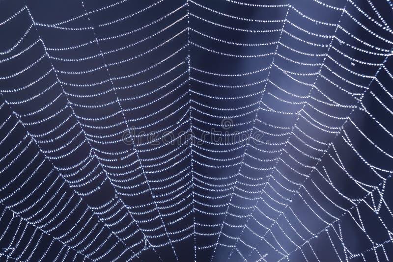 Spinnennetz mit Tautropfen auf der blauen Hintergrundnahaufnahme früh morgens stockfotografie