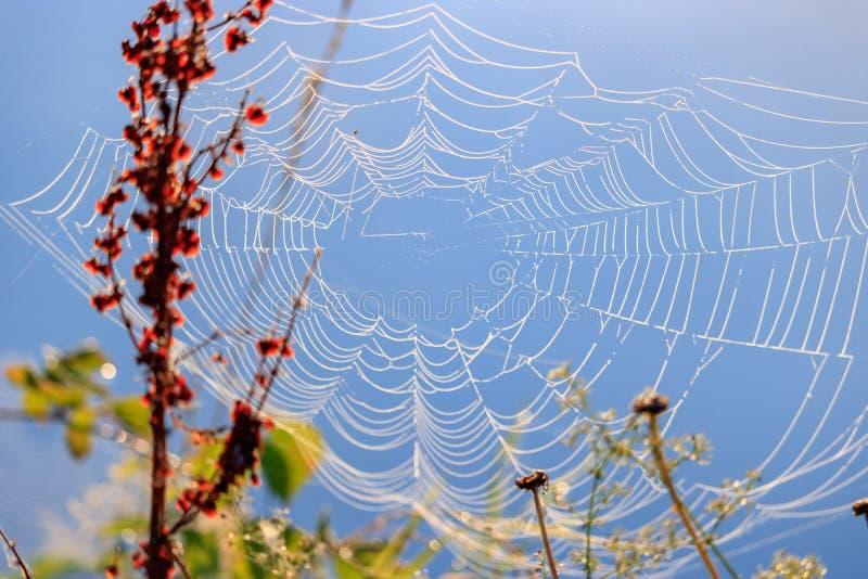 Spinnennetz mit Tautropfen auf einem Hintergrund von Anlagen gegen blauen Himmel lizenzfreie stockfotos