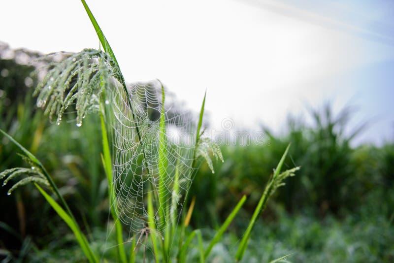 Spinnennetz mit Tautropfen morgens lizenzfreies stockbild