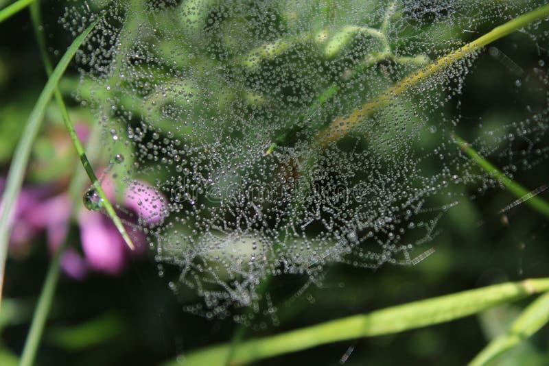 Spinnennetz, Tautropfen, stockfoto