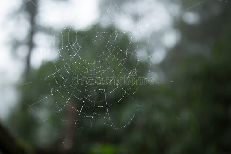 Spinnennetz und Tautropfen lizenzfreies stockfoto