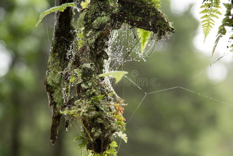 Spinnennetz und Tautropfen lizenzfreie stockfotografie