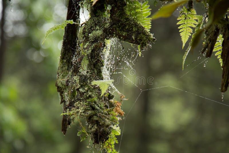 Spinnennetz und Tautropfen stockfotografie