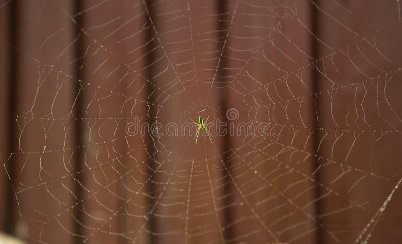 Spinnennetz und Tautropfen stockfotos