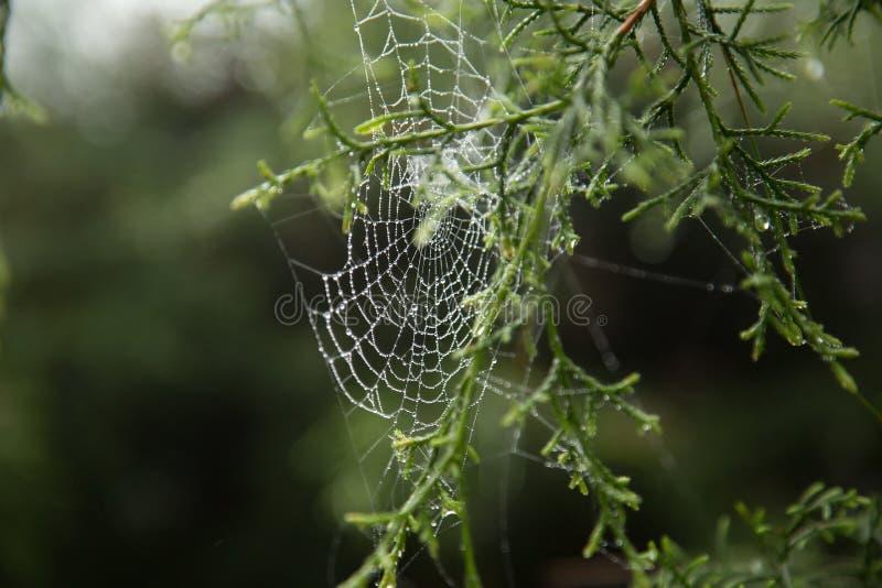 Spinnennetz und Tautropfen lizenzfreie stockbilder