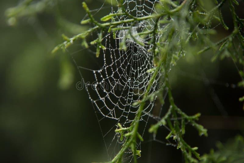 Spinnennetz und Tautropfen lizenzfreies stockbild