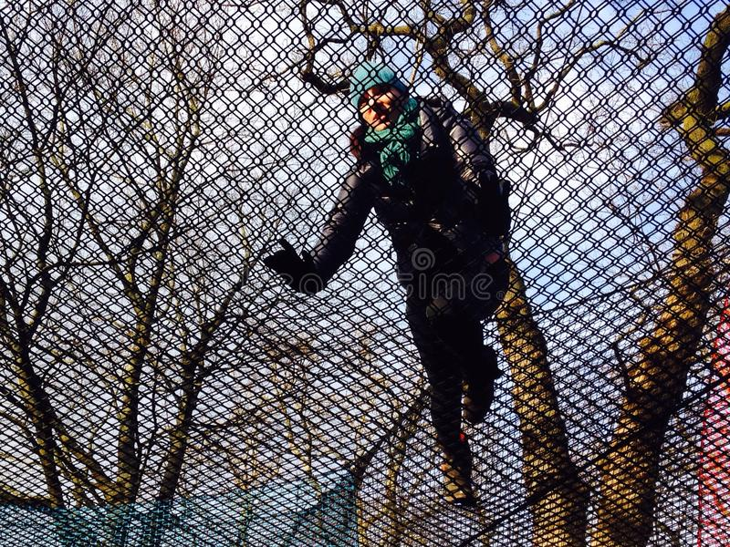 Spinnennetz unter den Bäumen lizenzfreies stockfoto