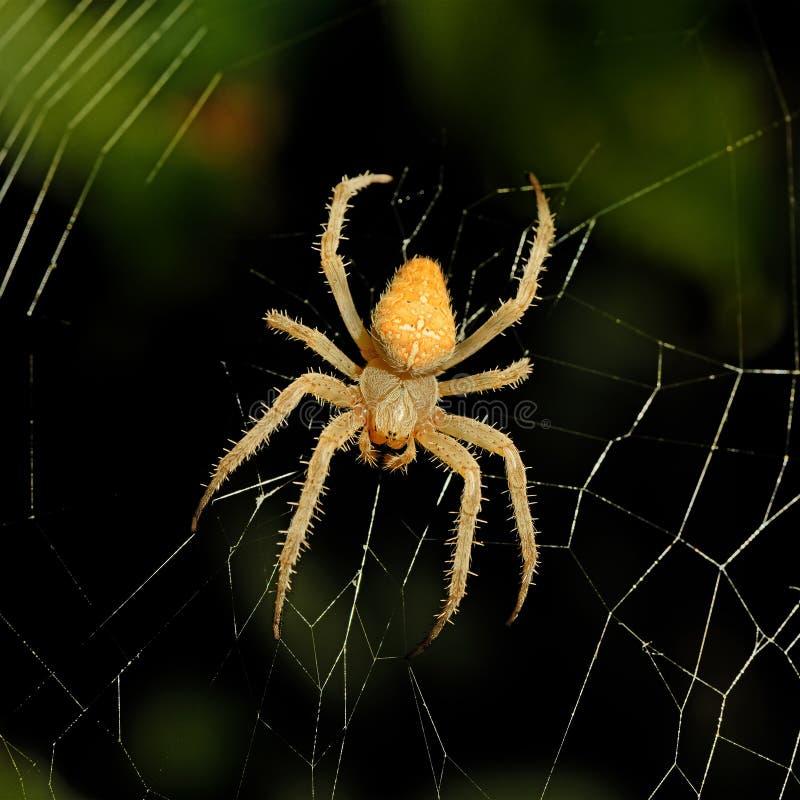 Spinnennetzhintergrund nachts lizenzfreie stockfotografie