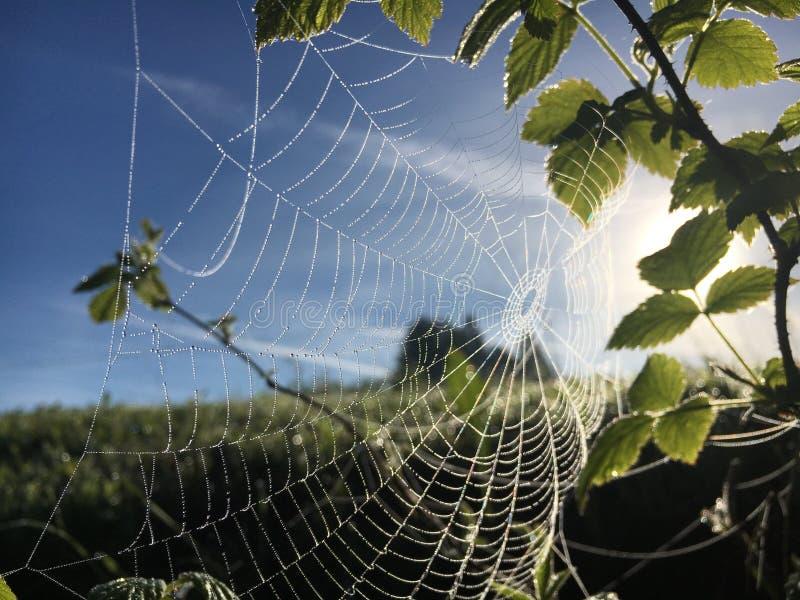 Spinnennetzsonnenlicht lizenzfreie stockfotos