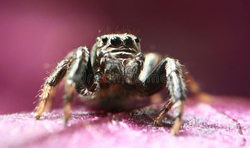 Spinnenpullover KLEINE LUSTIGE WANZE stockfotografie