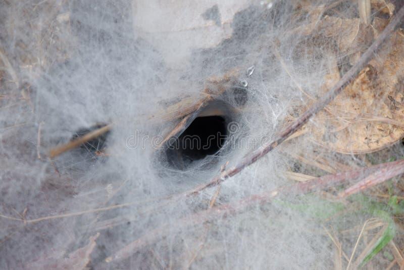 Spinnenspinnennetz auf dem Boden stockfotografie
