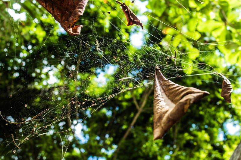 Spinnenspinnennetz mit Blättern und Schmutz lizenzfreie stockfotografie