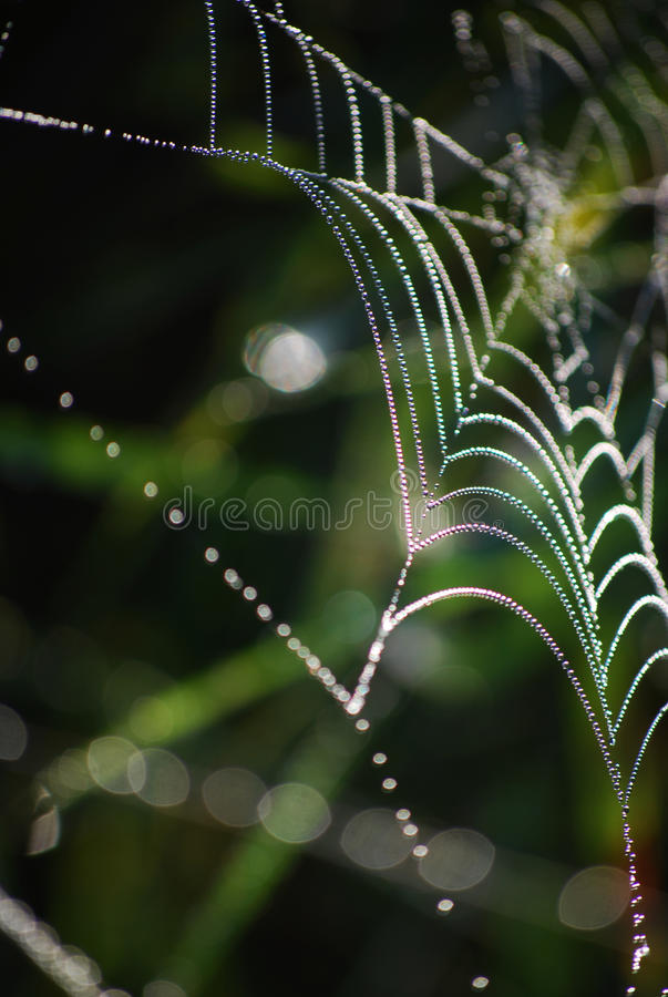 Spinnenweb stockbild