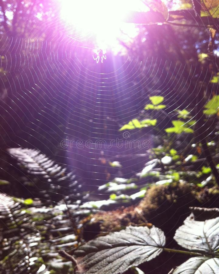 Spinnenweb stock foto