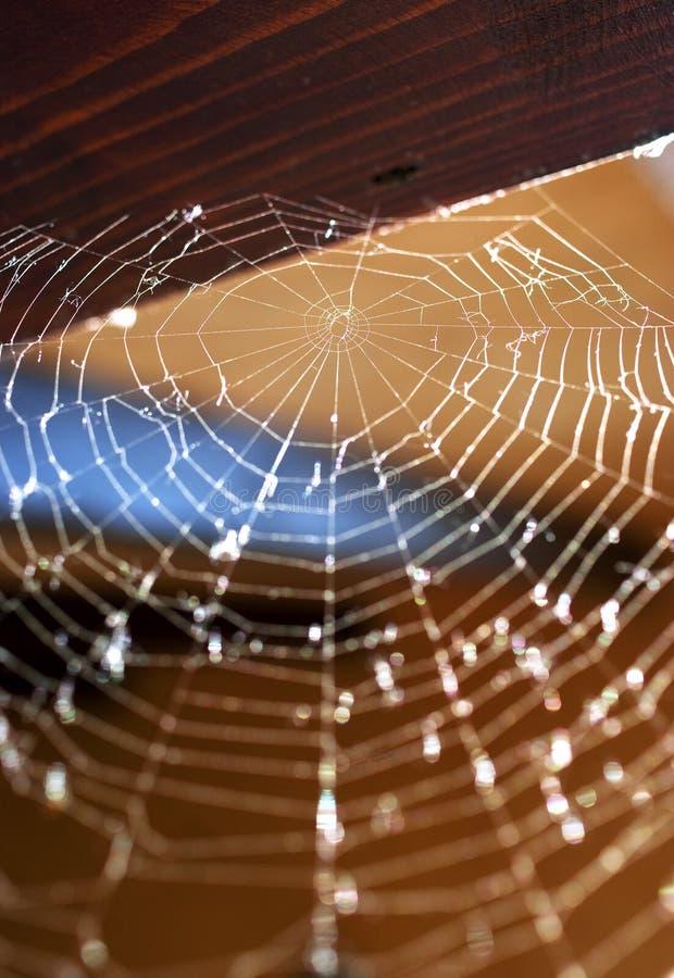 Spinnenweb stockbilder