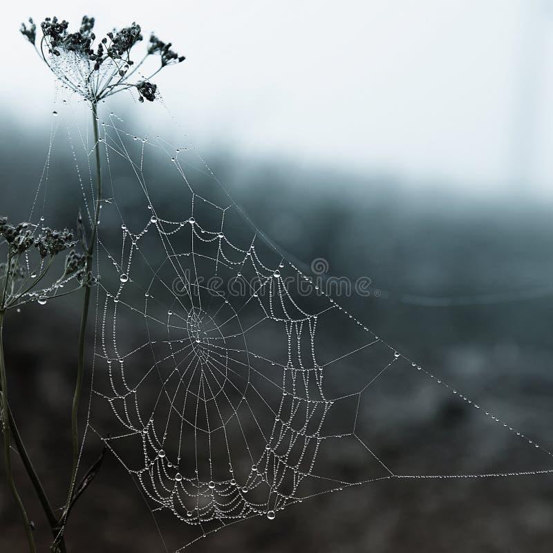 Spinnenweb lizenzfreies stockbild