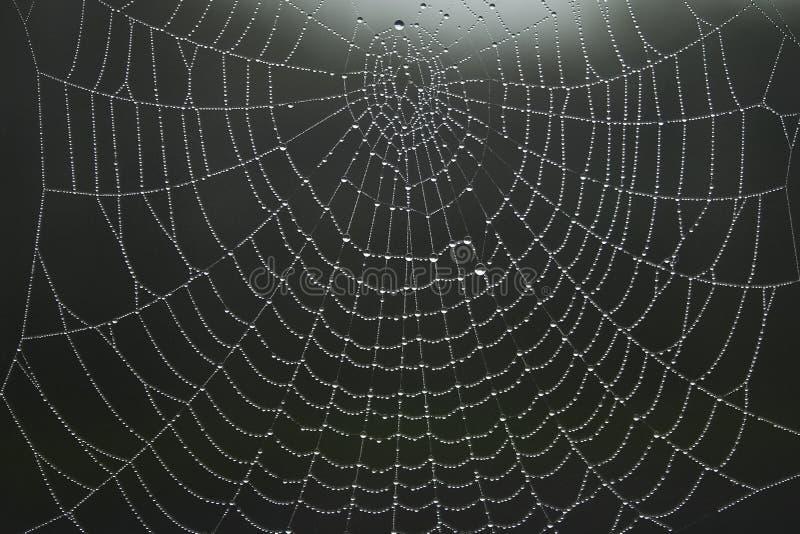 Spinnenweb royalty-vrije stock afbeeldingen