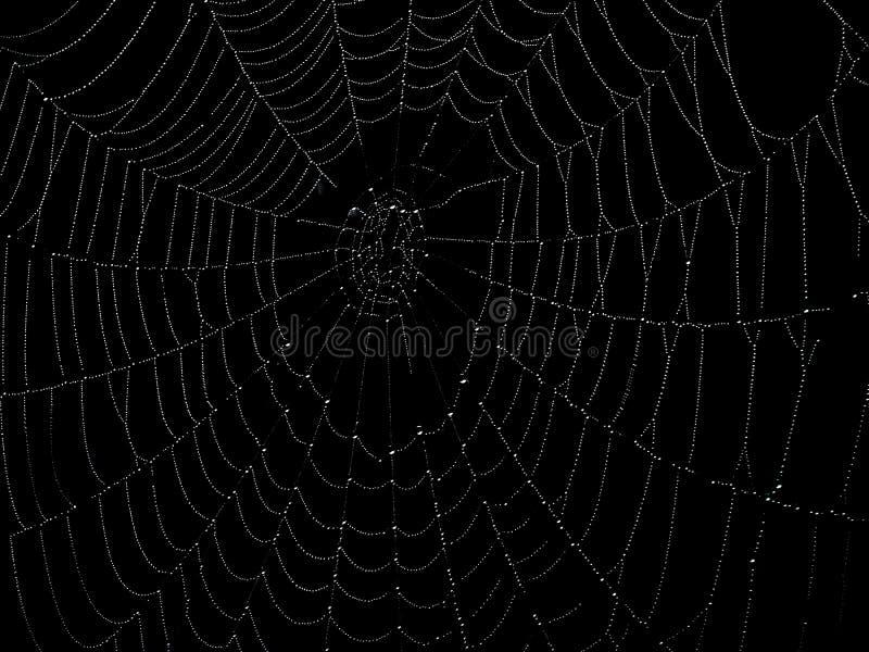Spinnenweb stockbild