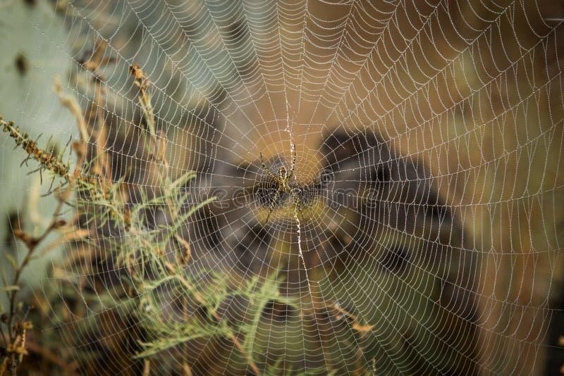 Spinnenweb-Abschluss oben lizenzfreie stockbilder