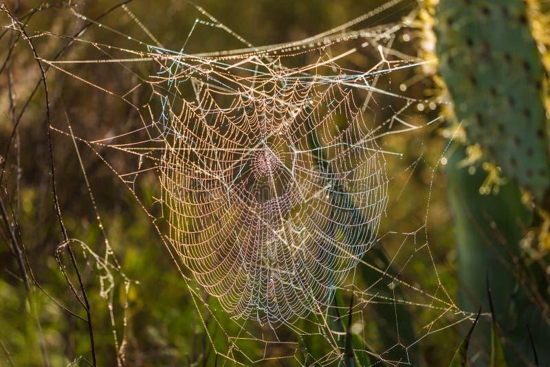 Spinnenweb-Abschluss oben lizenzfreie stockfotografie