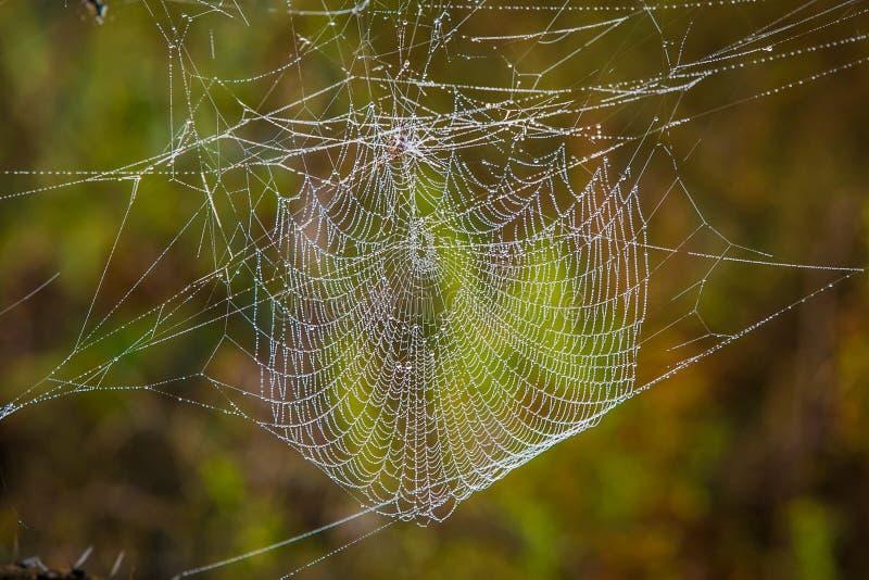 Spinnenweb-Abschluss oben stockbild
