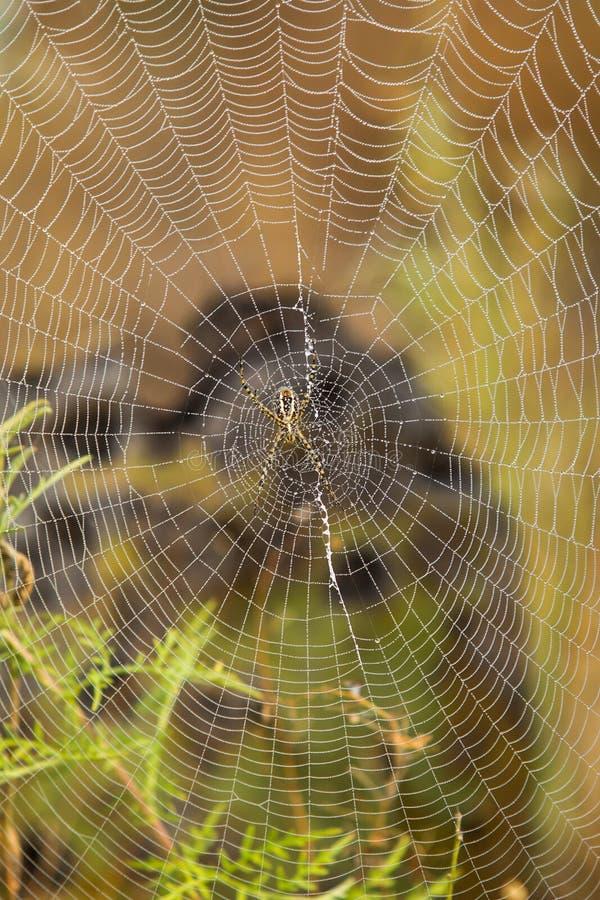 Spinnenweb-Abschluss oben stockbilder