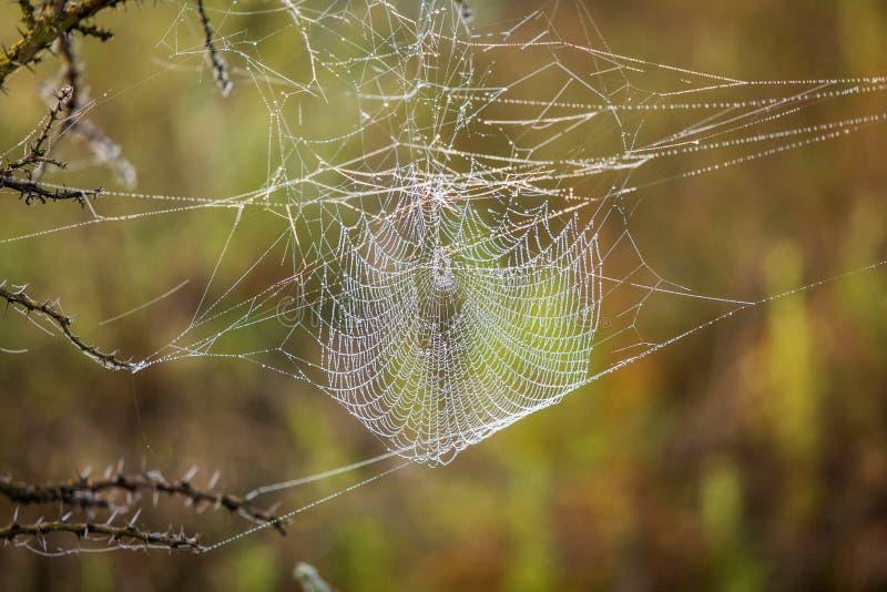 Spinnenweb-Abschluss oben stockfotografie