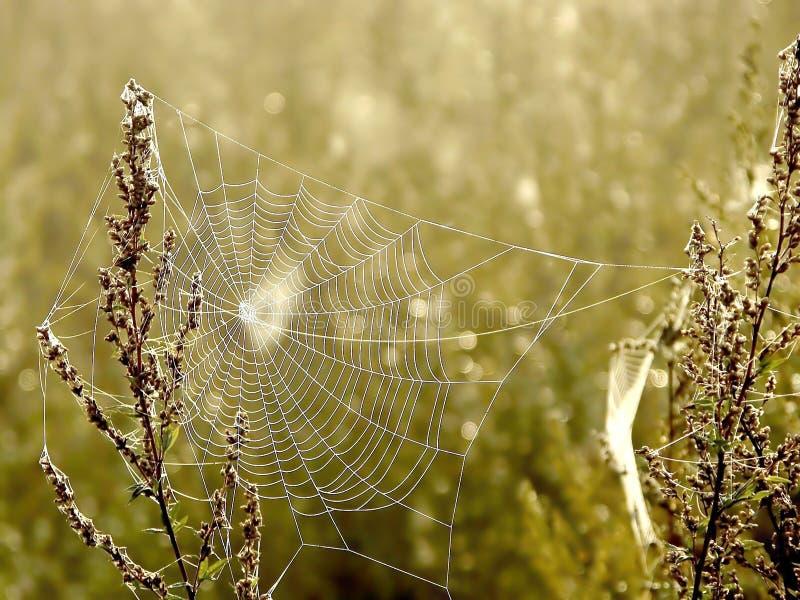 Spinnenweb auf einer Wiese am Sonnenaufgang stockfotografie