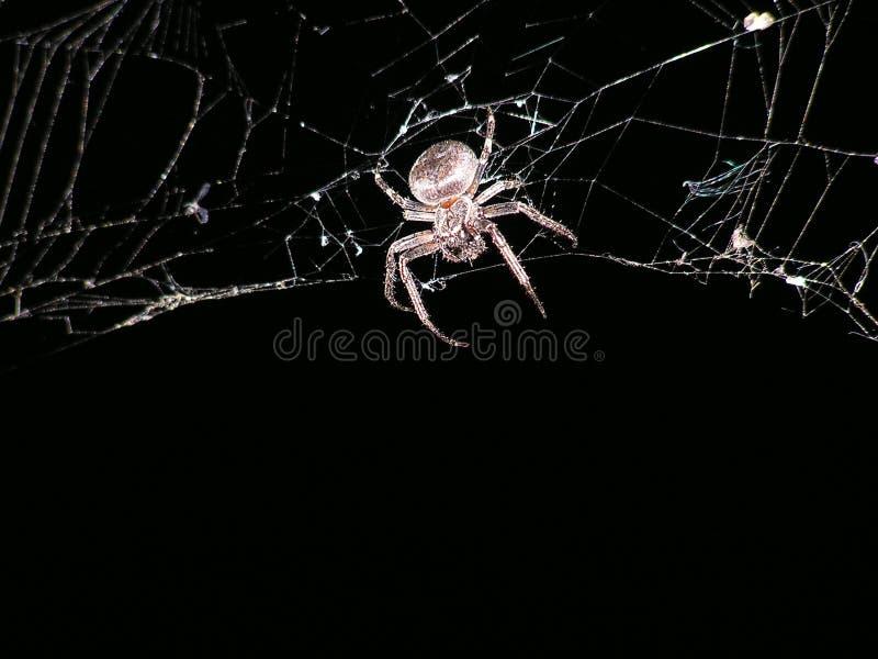 Spinnenweb an der Nachtbeschaffenheit stockbild