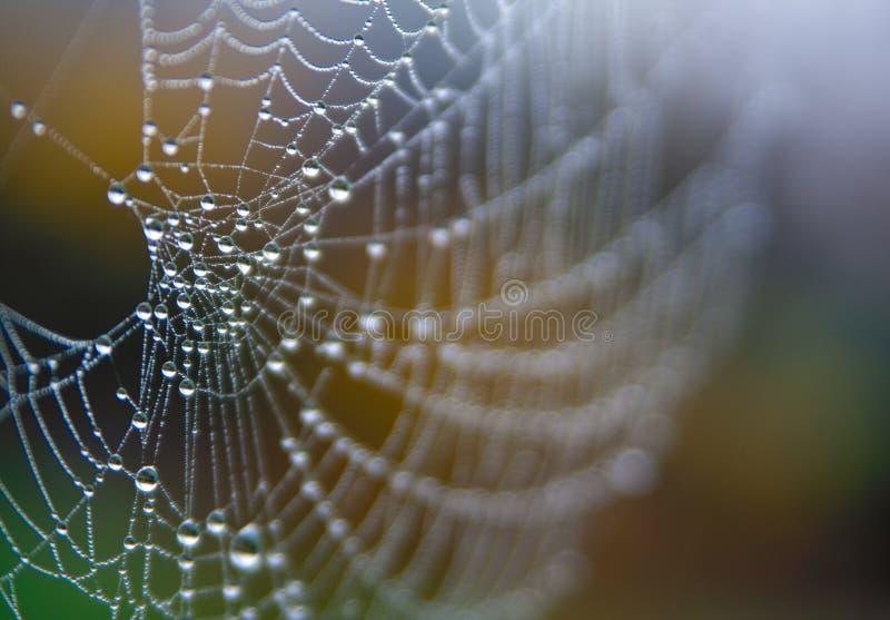 Spinnenweb mit Morgentau stockbilder