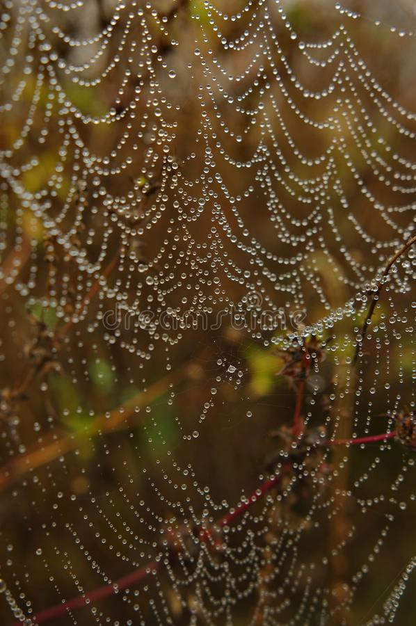 Spinnenweb mit Wassertropfen stockfotos