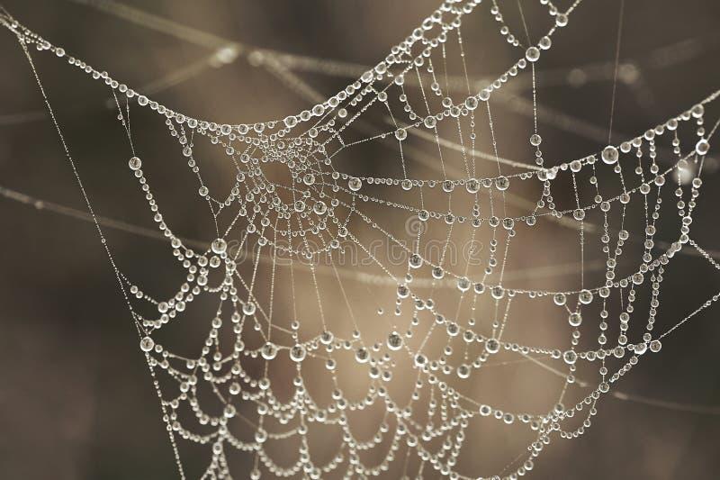 Spinnenweb mit Wassertropfen lizenzfreie stockfotografie