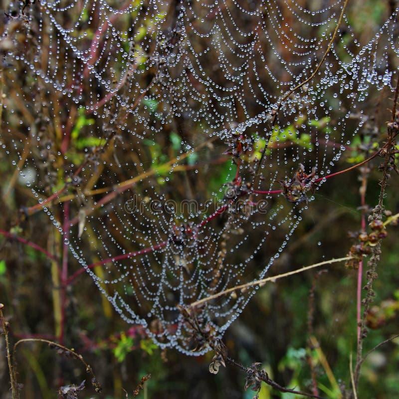 Spinnenweb mit Wassertropfen lizenzfreies stockfoto