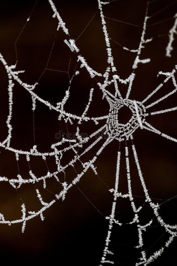 Spinnenweb, Spinnennetz lizenzfreies stockbild