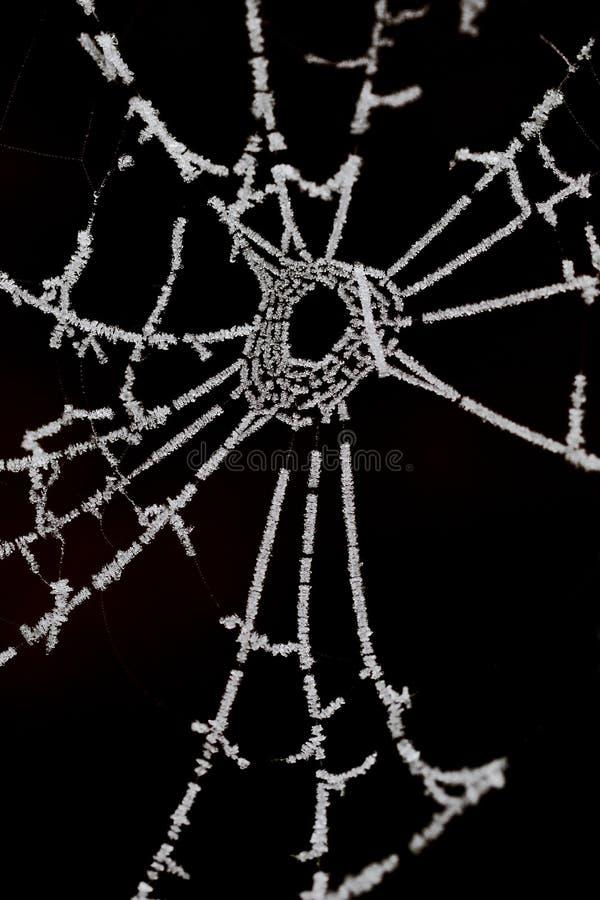Spinnenweb, Spinnennetz stockfotos