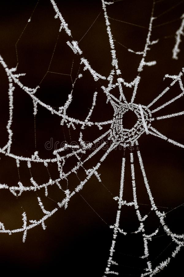 Spinnenweb, Web de aranha imagem de stock royalty free