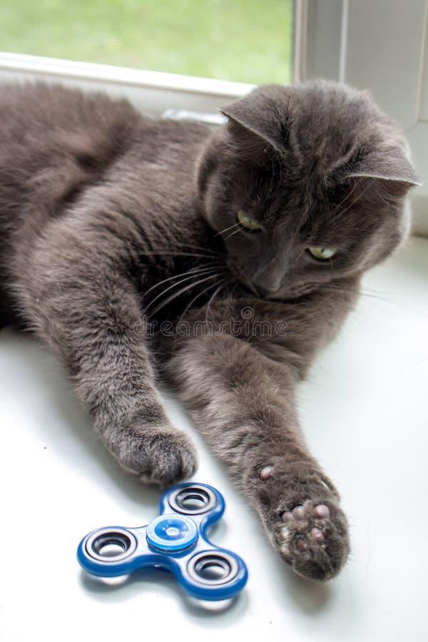 Spinner und spielen Katze lizenzfreies stockfoto