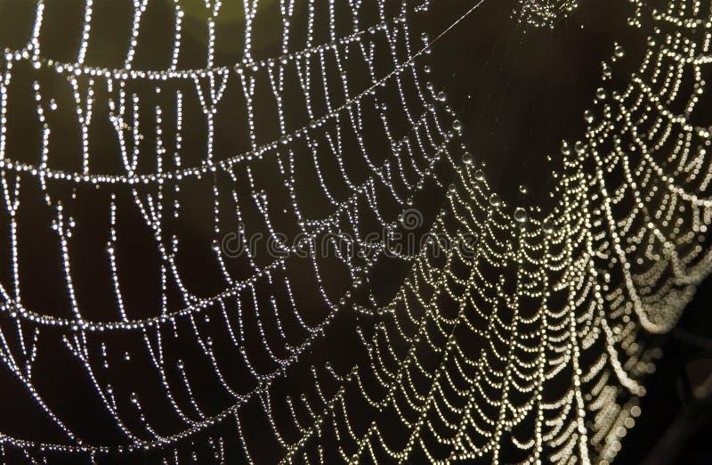 Spinneweb royalty-vrije stock afbeeldingen