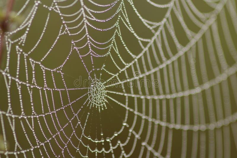 Spinneweb stock foto's