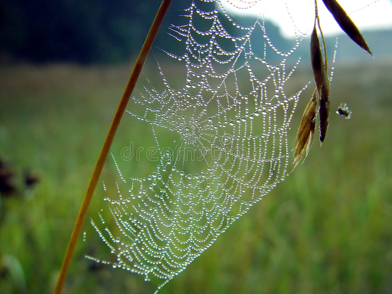 Spinneweb. stock afbeelding