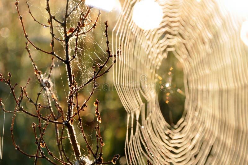 Spinneweb bij zonsopgang stock fotografie